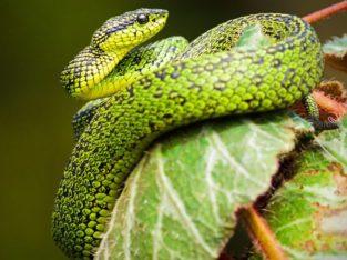 Ontdek de indrukwekkende fauna van Costa Rica - Zeppelin Reizen