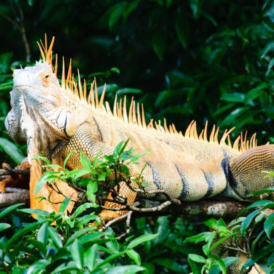 Costa Rica voorbeeldreis - Nationale Parken