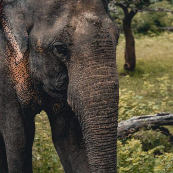 Sri Lanka voorbeeldreis