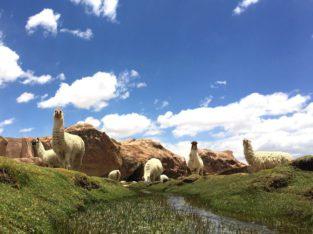 Zeppelin Reizen - Reis Bolivië