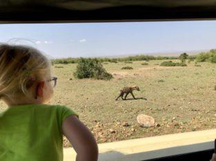 Hyena - safari Kenia