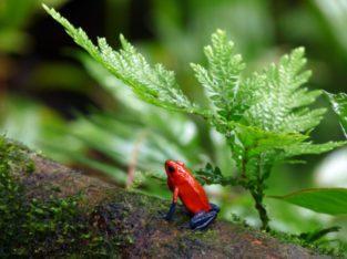 Op reis naar Costa Rica - Paradijs voor natuurliefhebbers