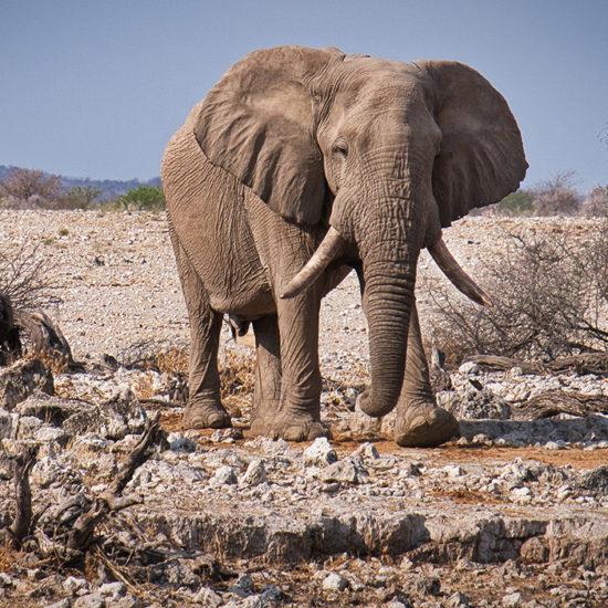 Namibië voorbeeldreis I Zeppelin Reizen I Unieke reizen op maat