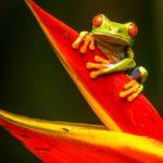 Reis Costa Rica I Zeppelin Reizen I Wonderlijke reizen perfect op uw maat